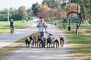 Male Dog walker in the park. Photographed in Tel Aviv, Israel