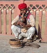Snake charming in Jaipur, Rajasthan, India.