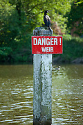Cormorant bird on Danger Weir sign on the River Thames in Berkshire, UK
