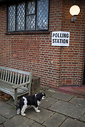 A King Charles pet dog waits for its owner outside St. Barnabas community hall in Dulwich Village in the south London borough of Southwark, serving as a polling station for the UK's General Election 2 weeks before Christmas, on 12th December 2019, in London, England.