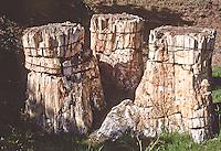 The Trio, three petrified sequoia stumps (Sequoa affins) Florissant Fossil  Beds National Monument, Colorado.