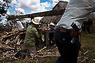 Ranchers make cane sugar juice in the Mayan Biosphere.