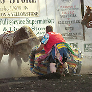A rodeo clown protects a rider from a bull. Montana