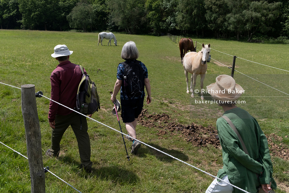 A group of middle-aged walking friends on a public footpath, pass through a meadow of horses, on 13th June 2021, in Kemsing, Kent, England.