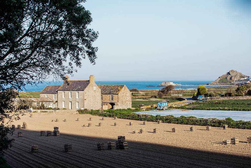 Farmhouse and ploughed fields with crates of Jersey Royal potatoes in St Ouen, with views of the sea and L'Etacq beyond in Jersey, Channel Islands