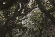 Labyrinth of light, moss and branches in cloud forest, Tararua Forest Park, New Zealand Ⓒ Davis Ulands   davisulands.com