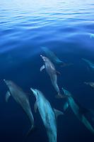 Soneva Fushi, Maldives, Paradise, Best Resorts in the World, Pool, Beach, Paradise, Dolphins