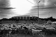 Lo Stadio San Nicola è il maggiore impianto sportivo della città di Bari, nonché il 4º stadio più grande d'Italia. Costruito per ospitare i mondiali di calcio del '90 il progetto venne assegnato all'architetto Renzo Piano (egli stesso diede al nuovo stadio il soprannome di Astronave). Il costo dell'opera è stato di circa 79 miliardi delle vecchie lire.  Bari, 25 agosto 2013. Christian Mantuano / OneShot