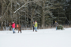 Four friends with horse and Christmas tree walking in snow landscape in forest, Bavaria, Germany