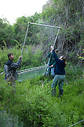 Biologists and students set up a harp trap designed to catch bats in flight after nightfall. The bats will be identified as part of a bat survey of the area. The Nature Conservancy's Dutch Henry Falls Preserve in Central Washington.
