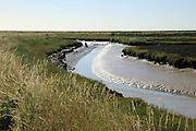 Muddy creek salt marsh River Ore, Orford Ness, Shingle Street, Hollesley, Suffolk, England, UK