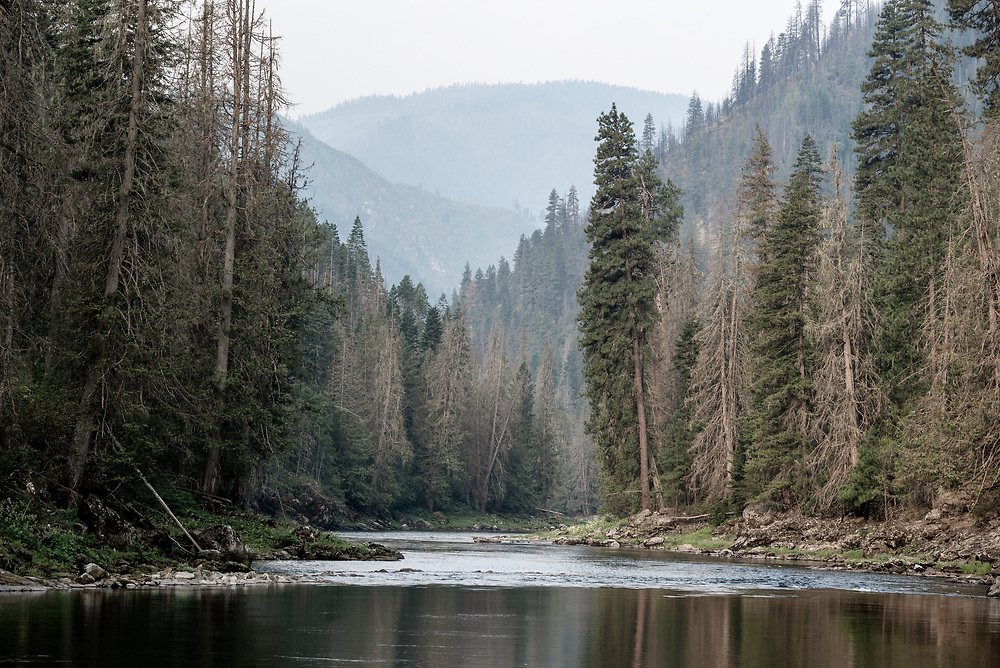 A calm section of the Selway River in the Selway-Bitterroot Wilderness, Idaho.