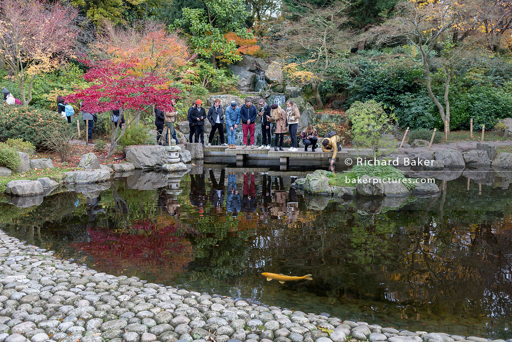 Visitors to the Kyoto Garden look into the water to see koi carp in Holland Parks' Kyoto Garden, on 17th November 2019, in London, England. The Kyoto Garden was opened in 1991. It was a gift from the city of Kyoto to commemorate the long friendship between Japan and Great Britain. Today, the Kyoto Garden is a popular part of Holland Park – but it's not the only Japanese garden in this green space. In July 2012, the Fukushima Memorial Garden was officially opened. It commemorates the gratitude of the Japanese people to the British people for their support following the natural disasters that struck in March 2011.