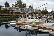 """Shrimp on sale on board the """"Trata"""".  Photographed from the boardwalk along Ganges Harbour in Ganges on Salt Spring Island, British Columbia, Canada."""