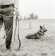 Gaucho man and dog, Pampas District, Argentinca