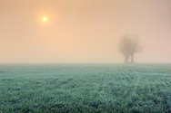 Taken on a cold morning of December about a hour after sunrise, in the fields around my hometown of Scalenghe in Piedmont, Italy.