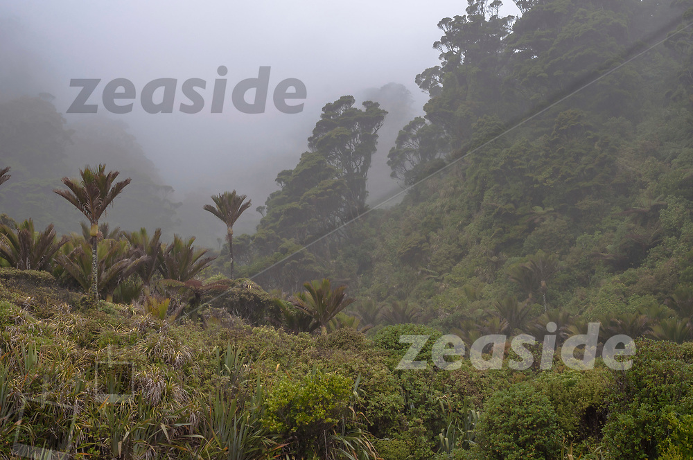 Spray, drifting into the lush dense coastal rainforest of the northern westcoast of New Zealands South Island. With heavy rain, this stretch of the Kahurangi National Park features an intense green and an immersive mystic atmosphere: the sounds of raindrops, the song of native birds and the crashing waves of the raging Tasman Sea.