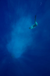 marine life sculpter dives through the ashes of his friend marine wildlife photographers James D. Watt,, Kailua Kona, Big Island, Hawaii, USA, Pacific Ocean, Pacific