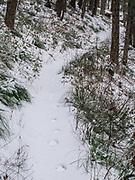 Hiking Wolf Creek Trail in the Swan Range