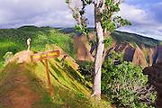 Hiker on the Po'omau Canyon Ditch Trail, Kokee State Park, Island of Kauai, Hawaii