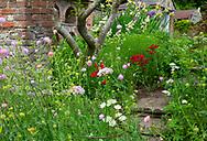 Allium, and Astrantia around stone steps in the Spring Garden at Stockton Bury Gardens, Kimbolton, Leominster, Herefordshire, UK