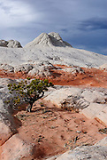A single tree in the White Pocket region of the South Coyote Buttes. Missoula Photographer
