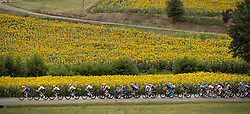 July 12, 2017 - Pau, FRANCE - Illustration picture shows the pack of riders passing a large field of sunflowers during the 11th stage of the 104th edition of the Tour de France cycling race, 203,5km from Eymet to Pau, France, Wednesday 12 July 2017. This year's Tour de France takes place from July first to July 23rd. BELGA PHOTO YUZURU SUNADA (Credit Image: © Yuzuru Sunada/Belga via ZUMA Press)