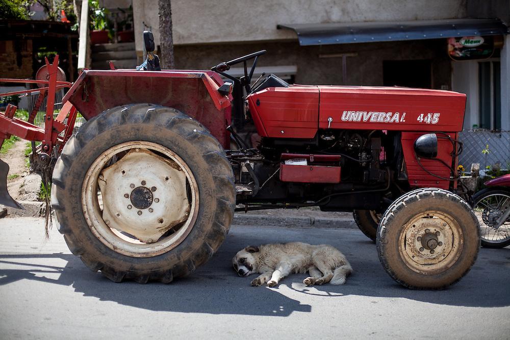 A dog sleeping under a tractor in a street in Delcevo.