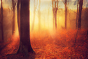 Texturized photograph of a sunrise in a beech tree forest.<br /> Prints & more: http://society6.com/DirkWuestenhagenImagery/bright-beginning-uM8_Print#1=45