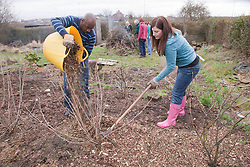 People mulching fruit bushes on an allotment.