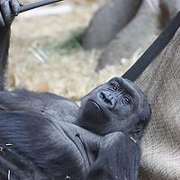 Animals - Primates