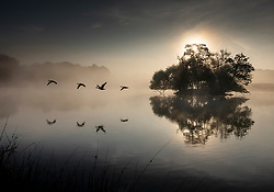 © Licensed to London News Pictures. 22/09/2021. London, UK. A flock of swans is reflected in Pen Ponds at sunrise in Richmond Park on the first day of autumn. Warm temperatures have heralded the start of the autumn season this week. Photo credit: Peter Macdiarmid/LNP