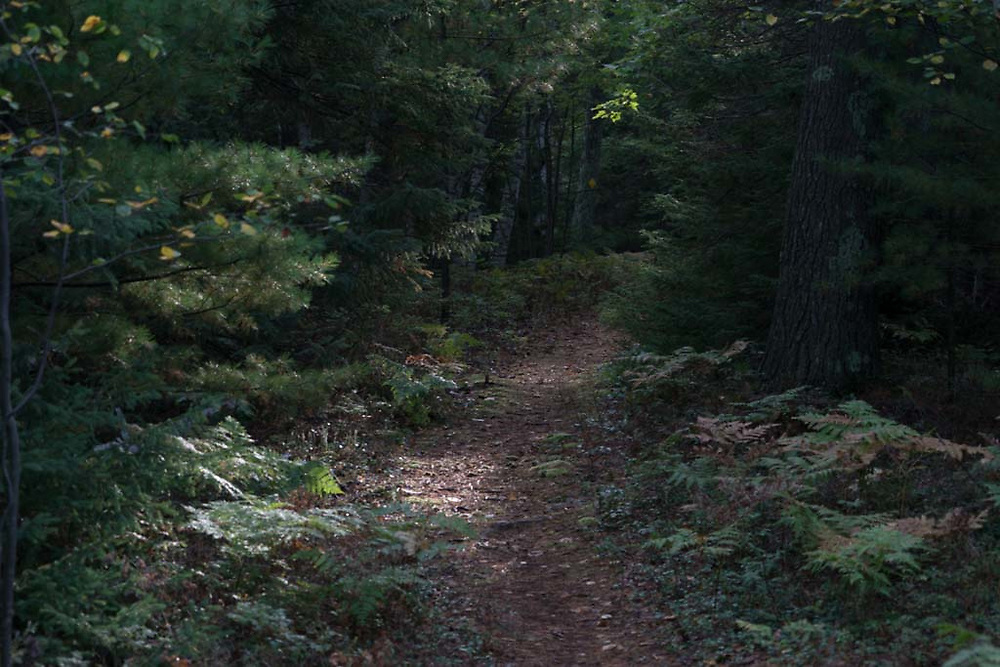 A trail leads through the Chocolay Bayou Preserve of the Upper Peninsula Land Conservancy near Marquette, Michigan.