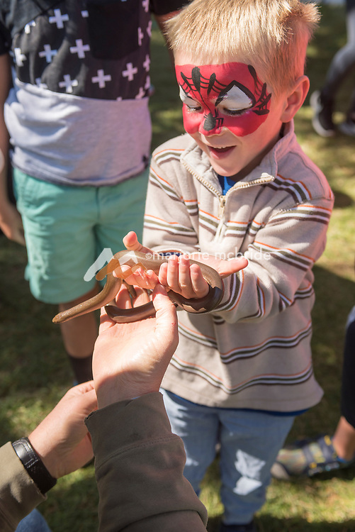 Little boy with happy face holding a Rubber Boa, native to Idaho at the Thousand Springs Art Festival at Ritter Island near Hagerman, Idaho. MR