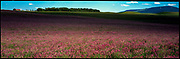 Birdseed Farm Field, Alberta, Canada, July 1998