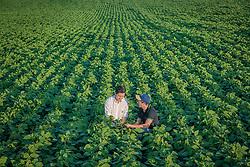 Agricultor e agrônomo inspecionam lavoura de soja, em Campo Mourão no Paraná. FOTO: Jefferson Bernardes/ Agência Preview