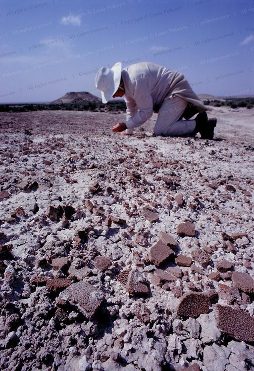 Jose Bonaparte investigates a field of dinosaur egg shell in Patagonia, Argentina.