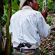 Cocoa is frequently stolen during harvest time when market prices are high, Mexico.
