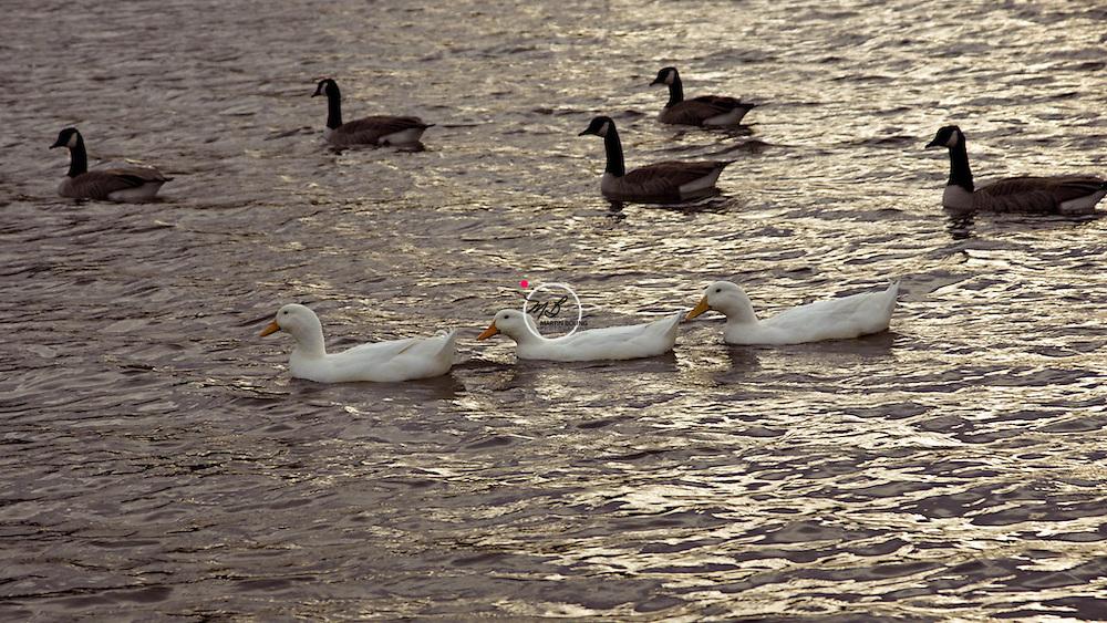 Ducks in a Row, Crestwood Kentucky