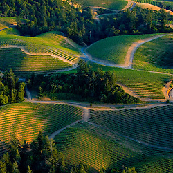 Aerial view of Vineyards in Sonoma County California