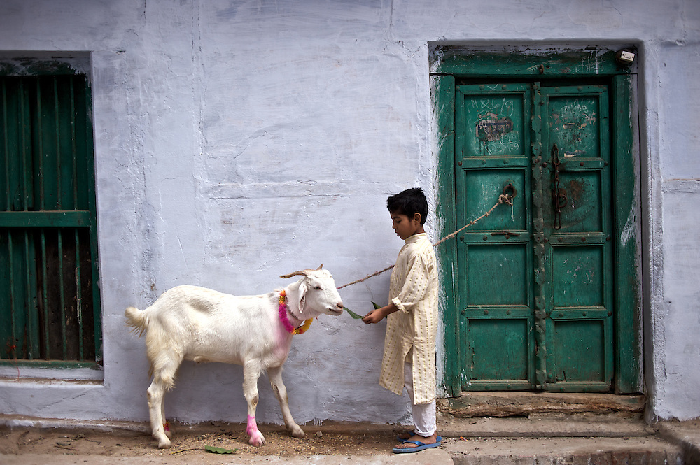 """Bakra Eid is also known as the """"Festival of Sacrifice"""" in the Muslim world, a celebration commemorating Abraham's willingness to sacrifice his son. Since God provided a ram in his place, a goat is sacrificed in memorial of this event."""