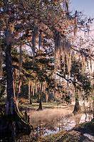 Everglades gallery evergladesgallery johnbobcarlos johnbob florida wild life