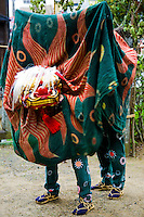At various festivals around the Japanese Islands, shishimai dances are performed to consecrate the festival ground and open the festival. A wooden lion mask and wooly-looking costume of woven and dyed banana/choma strips is worn, and the dance is performed to loud music featuring gongs, drums, bells, flutes, sanshin, and various other instruments. Some lion dances feature two or more dancers.