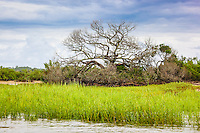 Salt marsh grass is lush and green after a storm.