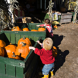Checking out the pumpkins at the Colby Farm stand in Newburyport, MA.
