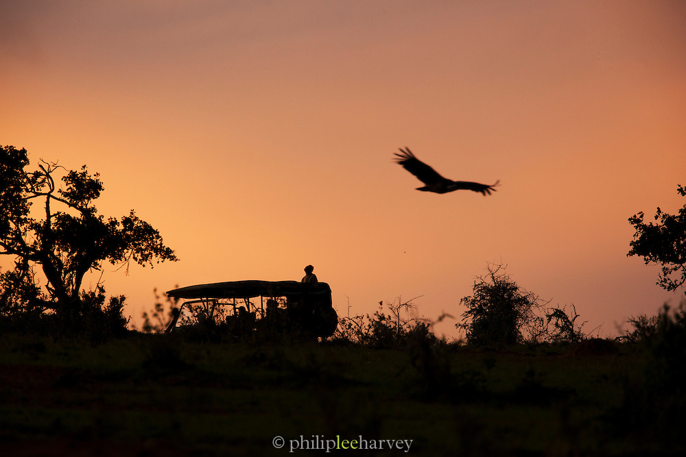 The silhouettes of a 4x4 safari vehicle and a low flying vulture in Cottars Conservancy, Kenya