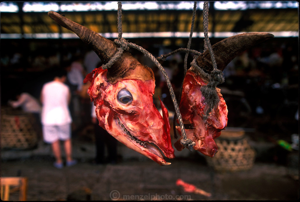 Cow head hanging in the municipal market in Guilin, China. (Supporting image from the project Hungry Planet: What the World Eats.) Grocery stores, supermarkets, and hyper and megamarkets all have their roots in village market areas where farmers and vendors would converge once or twice a week to sell their produce and goods. In farming communities, just about everyone had something to trade or sell. Small markets are still the lifeblood of communities in the developing world.