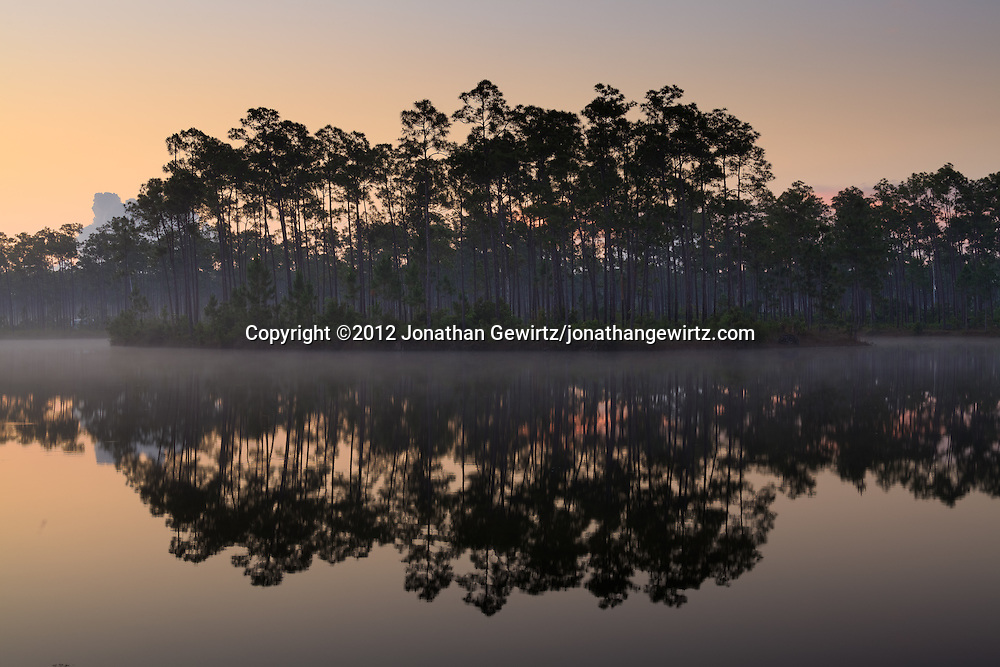 The sky brightens above morning fog around an island of slash pines in the pond at Long Pine Key campground in Everglades National Park, Florida. WATERMARKS WILL NOT APPEAR ON PRINTS OR LICENSED IMAGES.