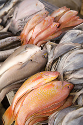 South America, Ecuador, Pujili, fish on display at weekly outdoor food market
