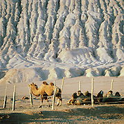 Camel pen at the foot of the Singing Sand Dunes, Silk Route; Mingsha Mountain, Dunhuang, Jiuquan, Gansu Province, China.
